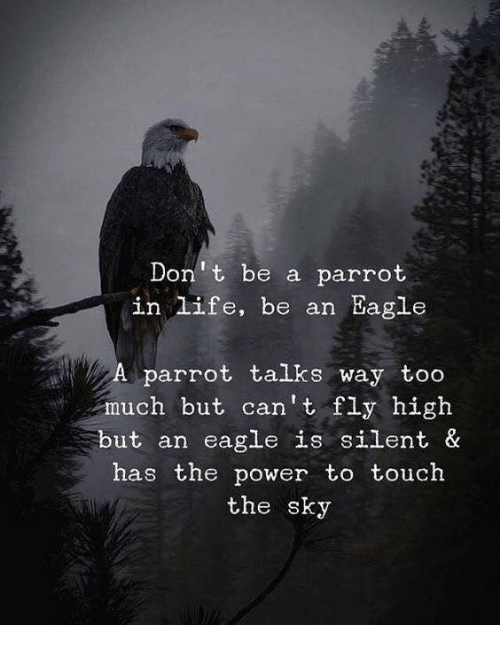 Life, Too Much, and Eagle: Don t be a parrot  in life, be an Eagle  A parrot talks way too  much but can't fly high  but an eagle is silent &  has the power to touch  the sky