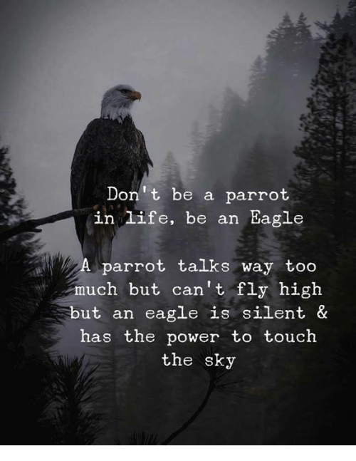 Life, Too Much, and Eagle: Don't be a parrot  in life, be an Bagle  A parrot talks way too  much but can't fly high  but an eagle is silent &  has the power to touch  the sky