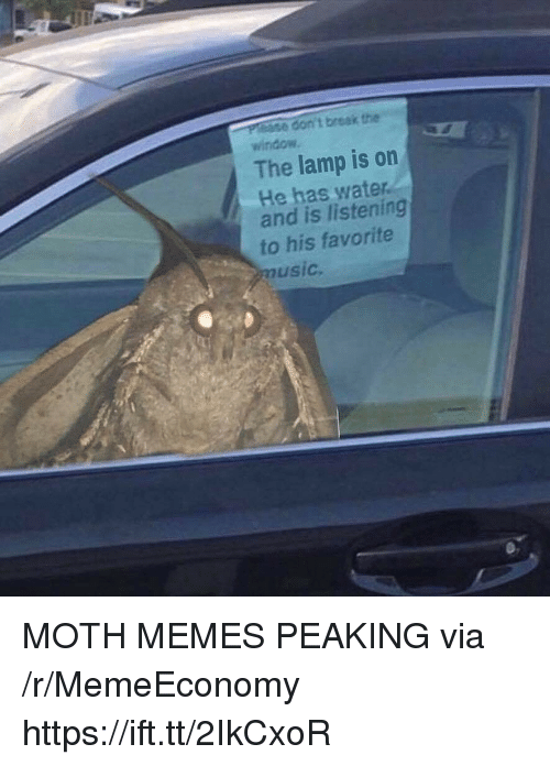 Memes, Break, and Water: don't break the  window  The lamp is on  He has water  and is listening  to his favorite  usic MOTH MEMES PEAKING via /r/MemeEconomy https://ift.tt/2IkCxoR