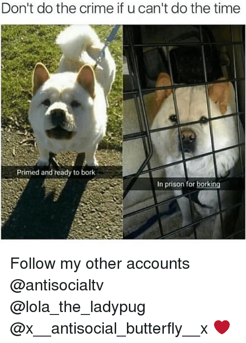 Borked: Don't do the crime if u can't do the time  Primed and ready to bork  In prison for borking Follow my other accounts @antisocialtv @lola_the_ladypug @x__antisocial_butterfly__x ❤️