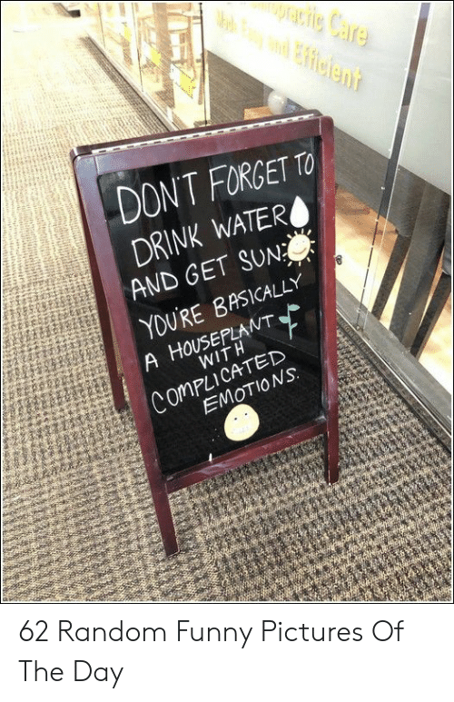 Funny, Pictures, and Sun: DONT FORGETTO  DRINK WATERO  AND GET SUN  YDURE BASICALLY  A HOUSEPLANT  WITH  ComPLICATED  EMOTIONS: 62 Random Funny Pictures Of The Day