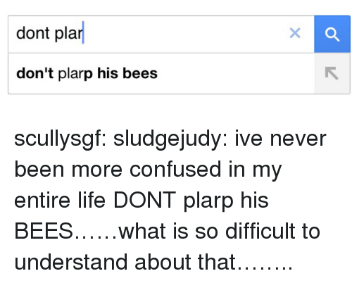 Confused, Life, and Target: dont pla  don't plarp his bees scullysgf:  sludgejudy:  ive never been more confused in my entire life  DONT plarp his BEES……what is so difficult to understand about that……..