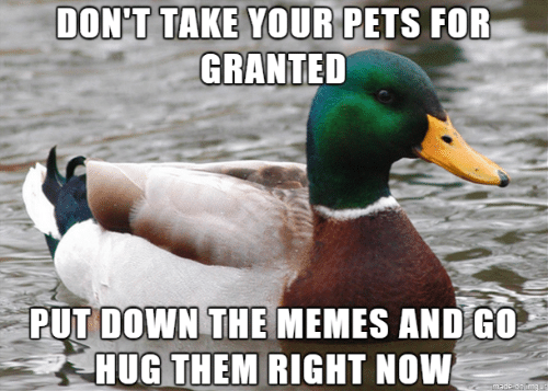 Memes, Pets, and Imgur: DON'T TAKE YOUR PETS FOR  GRANTED  PUT DOWN THE MEMES AND G0  HUG THEM RIGHT NOW  made on Imgur
