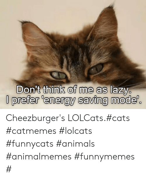 funnymemes: Don't think of me as lazy  prefer 'energy saving mode'. Cheezburger's LOLCats.#cats #catmemes #lolcats #funnycats #animals #animalmemes #funnymemes #