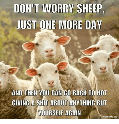 Not Giving A Shit: DONT WORRY SHEEP.  JUST ONE MORE DAY  AND THEN YOU CAN GO BACK TO NOT  GIVING A SHIT ABOUT ANYTHING BUT  YOURSELF  AGAIN  mematic net