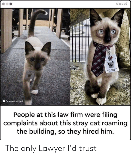 dose: dose  LEON ADVOGATO  Dr Jeanette Laredo  People at this law firm were filing  complaints about this stray cat roaming  the building, so they hired him. The only Lawyer I'd trust