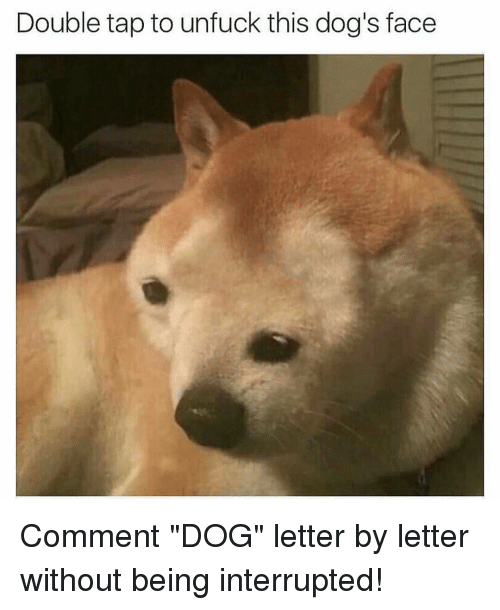 """Dog Faces: Double tap to unfuck this dog's face Comment """"DOG"""" letter by letter without being interrupted!"""