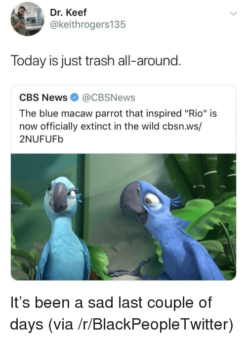"""Keef: Dr. Keef  @keithrogers135  Today is just trash all-around.  CBS News@CBSNews  The blue macaw parrot that inspired """"Rio"""" is  now officially extinct in the wild cbsn.ws/  2NUFUFb It's been a sad last couple of days (via /r/BlackPeopleTwitter)"""