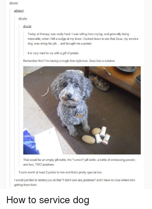 """Crying, How To, and Potato: drovie:  afkland  drovie  drovie  Today at therapy was really hard. I was sitting here crying, and generally being  miserable, when I felt a nudge at my knee. I looked down to see that Zeus, my service  dog, was doing his job.. and brought me a potato  it is very hard to cry with a gift of potato.  Remember this? I'm having a rough time right now. Zeus has a solution  That would be an empty pll bottle, the """"correct pill bottle, a bottle of embossing powder  and two, TWO potatoes.  You're worth at least 2 potato to him and that's pretty special imo.  I would just like to remind you all that """"I don't own any potatoes and I have no clue where he's  getting them from. How to service dog"""