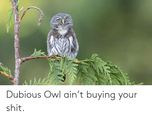 Buying: Dubious Owl ain't buying your shit.