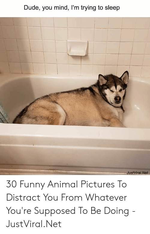 funny animal: Dude, you mind, I'm trying to sleep  JustViral.Net 30 Funny Animal Pictures To Distract You From Whatever You're Supposed To Be Doing - JustViral.Net