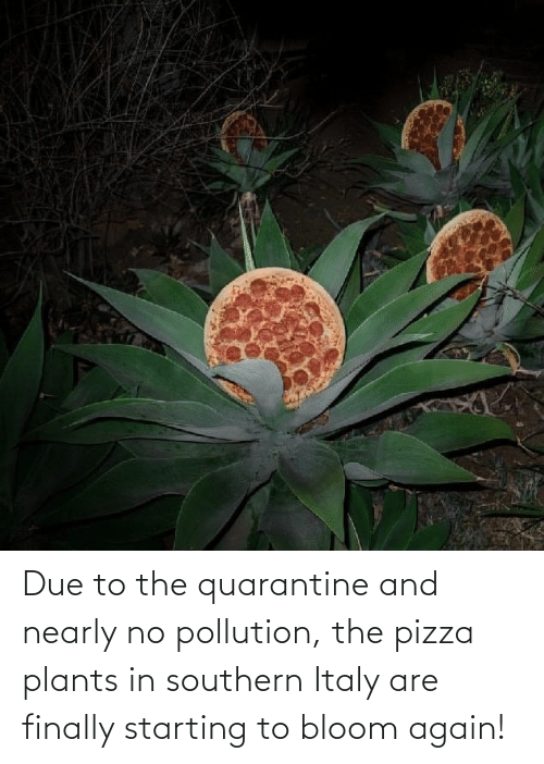 finally: Due to the quarantine and nearly no pollution, the pizza plants in southern Italy are finally starting to bloom again!
