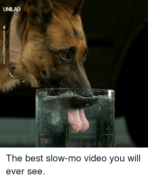 Dank, Best, and Video: DWARPEDPERCEPTION The best slow-mo video you will ever see.