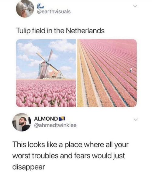 almond: @earthvisuals  Tulip field in the Netherlands  ALMOND  @ahmedtwinkiee  This looks like a place where all your  worst troubles and fears would just  disappear