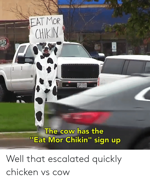 "Chicken, Cow, and Sign Up: EAT MOR  CHIKIM  The cow has the  ""Eat Mor Chikin"" sign up  I0 Well that escalated quickly chicken vs cow"