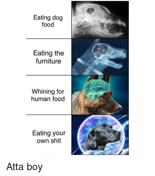 Food, Memes, and Shit: Eating dog  food  Eating the  furniture  Whining for  human food  Eating your  own shit Atta boy