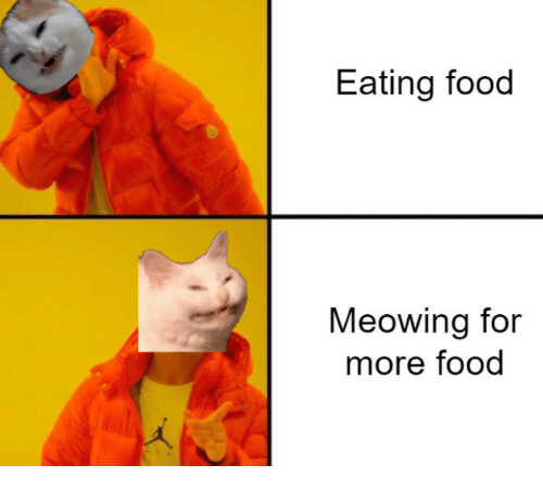 Food, For, and More: Eating food  Meowing for  more food