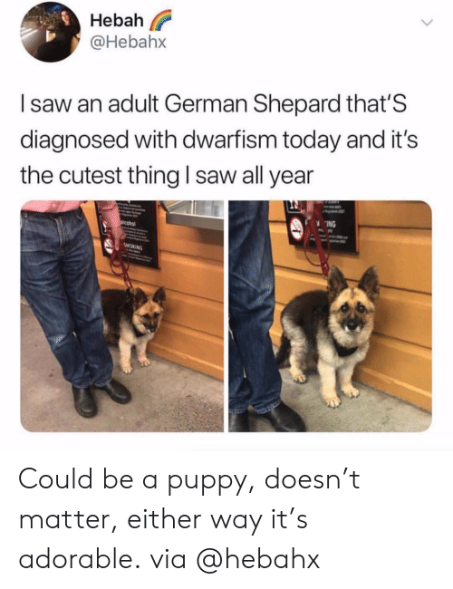 Saw, Smoking, and Puppy: eba  @Hebahx  I saw an adult German Shepard that'S  diagnosed with dwarfism today and it's  the cutest thing I saw all year  ING  SMOKING Could be a puppy, doesn't matter, either way it's adorable. via @hebahx