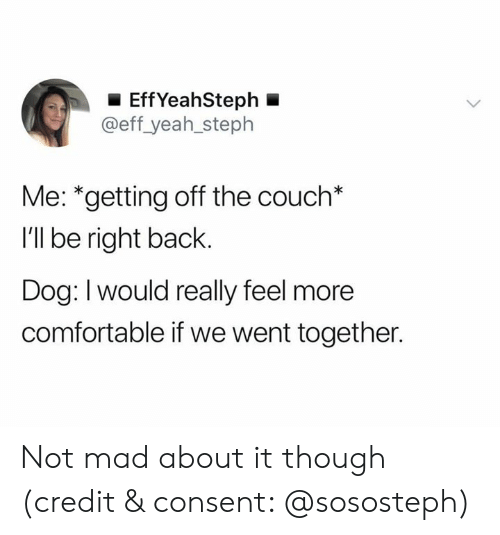 Comfortable, Yeah, and Couch: EffYeahSteph  @eff_yeah_steph  Me: *getting off the couch*  I'll be right back.  Dog: Iwould really feel more  comfortable if we went together. Not mad about it though (credit & consent: @sososteph)