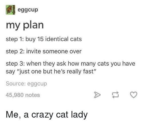"""Cats, Crazy, and Memes: eggcup  my plan  step 1: buy 15 identical cats  step 2: invite someone over  step 3: when they ask how many cats you have  say """"just one but he's really fast""""  Source: eggcup  45,980 notes Me, a crazy cat lady"""