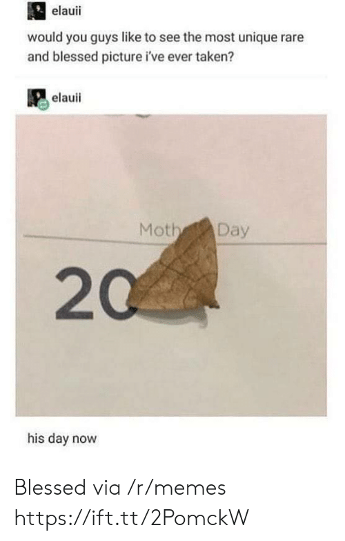 Blessed, Memes, and Taken: elauii  would you guys like to see the most unique rare  and blessed picture i've ever taken?  elauii  Moth Day  20  his day novw Blessed via /r/memes https://ift.tt/2PomckW