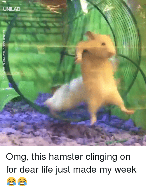 My Week: ELDER SANCHEZ VIA STO  IL Omg, this hamster clinging on for dear life just made my week 😂😂