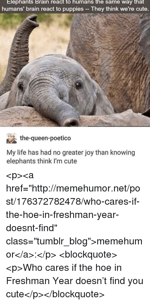"Cute, Hoe, and Life: Elephants Brain react to humans the same way that  humans' brain react to puppies They think we're cute.  the-queen-poetico  My life has had no greater joy than knowing  elephants think l'm cute <p><a href=""http://memehumor.net/post/176372782478/who-cares-if-the-hoe-in-freshman-year-doesnt-find"" class=""tumblr_blog"">memehumor</a>:</p>  <blockquote><p>Who cares if the hoe in Freshman Year doesn't find you cute</p></blockquote>"