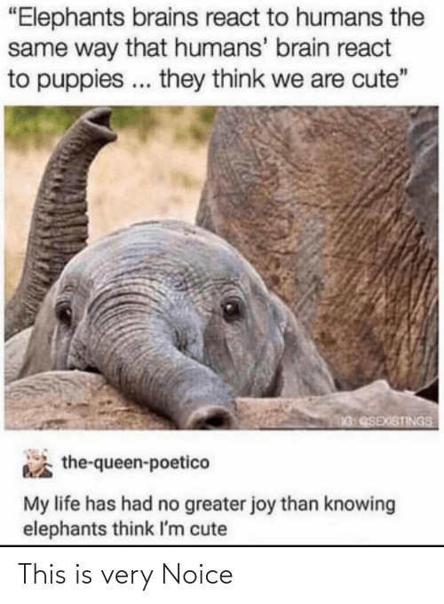 "the queen: ""Elephants brains react to humans the  same way that humans' brain react  to puppies .. they think we are cute""  IG QSEXISTINGS  the-queen-poetico  My life has had no greater joy than knowing  elephants think I'm cute This is very Noice"