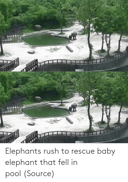 Rush: Elephants rush to rescue baby elephant that fell in pool (Source)