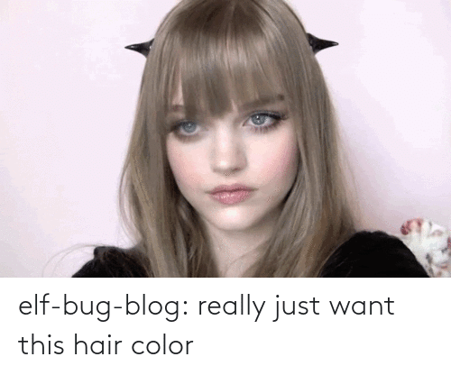 Elf: elf-bug-blog:  really just want this hair color