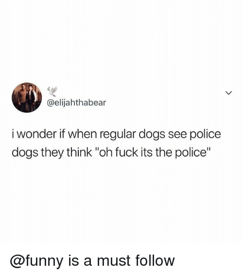 """police dogs: @elijahthabear  i wonder if when regular dogs see police  dogs they think """"oh fuck its the police"""" @funny is a must follow"""