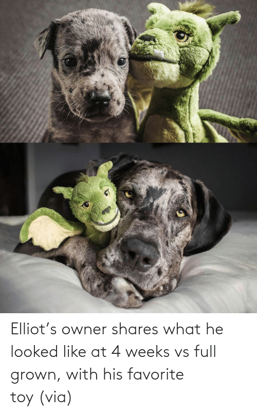 His: Elliot's owner shares what he looked like at 4 weeks vs full grown, with his favorite toy (via)
