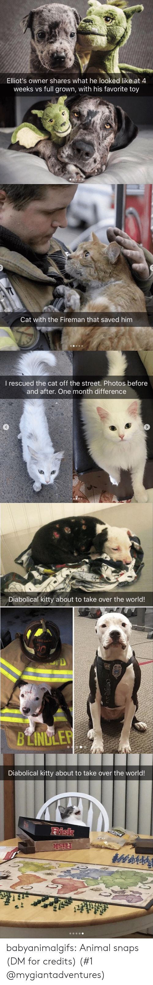 Instagram, Target, and Tumblr: Elliot's owner shares what he looked like at 4  weeks vs full grown, with his favorite toy   Cat with the Fireman that saved him   I rescued the cat off the street. Photos before  and after. One month difference   Diabolical kitty about to take over the world!  BLINULEP   Diabolical kitty about to take over the world!  Risk babyanimalgifs: Animal snaps  (DM for credits) (#1 @mygiantadventures)