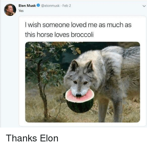 Horse, Elon Musk, and Broccoli: Elon Musk@elonmusk Feb 2  res  I wish someone loved me as much as  this horse loves broccoli Thanks Elon