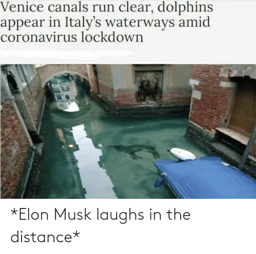 Laughs: *Elon Musk laughs in the distance*