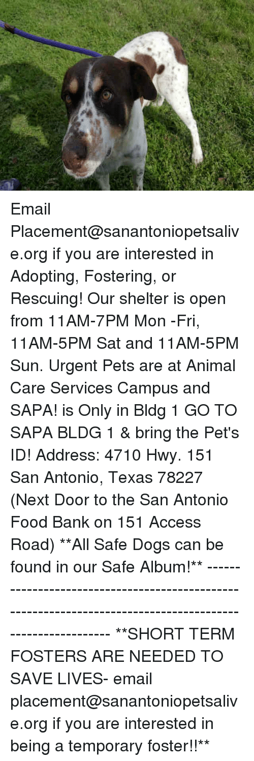 shortness: Email Placement@sanantoniopetsalive.org if you are interested in Adopting, Fostering, or Rescuing!  Our shelter is open from 11AM-7PM Mon -Fri, 11AM-5PM Sat and 11AM-5PM Sun.  Urgent Pets are at Animal Care Services Campus and SAPA! is Only in Bldg 1 GO TO SAPA BLDG 1 & bring the Pet's ID! Address: 4710 Hwy. 151 San Antonio, Texas 78227 (Next Door to the San Antonio Food Bank on 151 Access Road)  **All Safe Dogs can be found in our Safe Album!** ---------------------------------------------------------------------------------------------------------- **SHORT TERM FOSTERS ARE NEEDED TO SAVE LIVES- email placement@sanantoniopetsalive.org if you are interested in being a temporary foster!!**