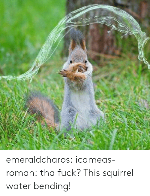 Gif, Tumblr, and Blog: emeraldcharos: icameas-roman:  tha fuck? This squirrel water bending!