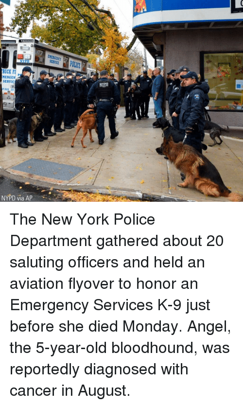 Memes, New York, and Police: EMERGENCY  SERVICE  RUCK F  MERGEN  SERVIC  50  NYPD via AP The New York Police Department gathered about 20 saluting officers and held an aviation flyover to honor an Emergency Services K-9 just before she died Monday. Angel, the 5-year-old bloodhound, was reportedly diagnosed with cancer in August.