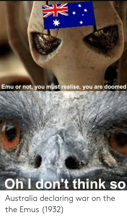 emu: Emu or not, you must realise, you are doomed  Oh I don't think so Australia declaring war on the the Emus (1932)