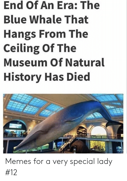 Memes, Blue, and History: End Of An Era: The  Blue Whale That  Hangs From The  Ceiling Of The  Museum Of Natural  History Has Died Memes for a very special lady #12