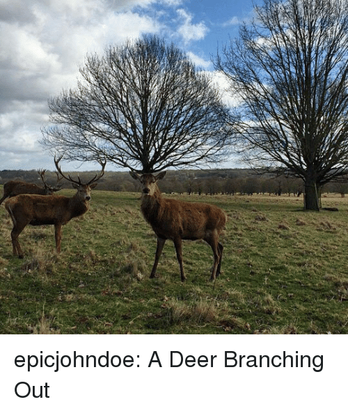 Deer, Tumblr, and Blog: epicjohndoe:  A Deer Branching Out