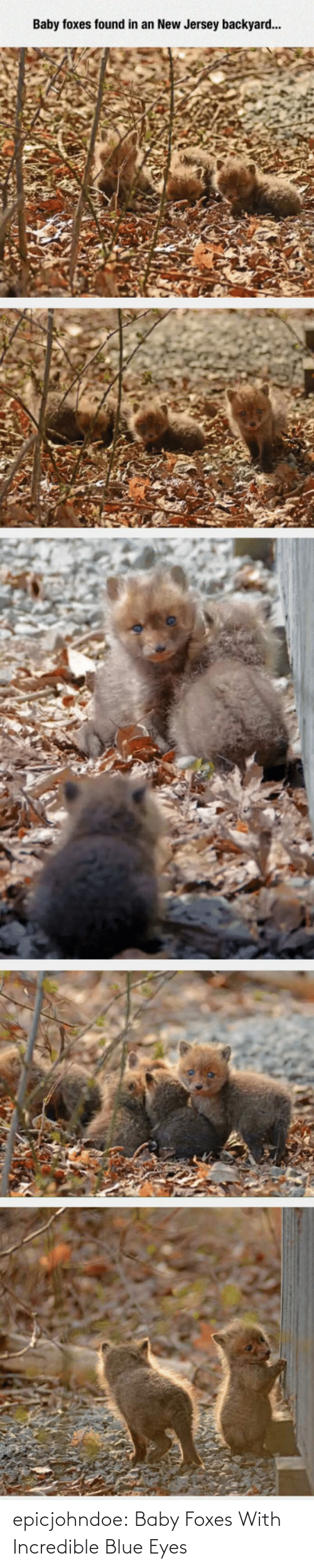 foxes: epicjohndoe:  Baby Foxes With Incredible Blue Eyes