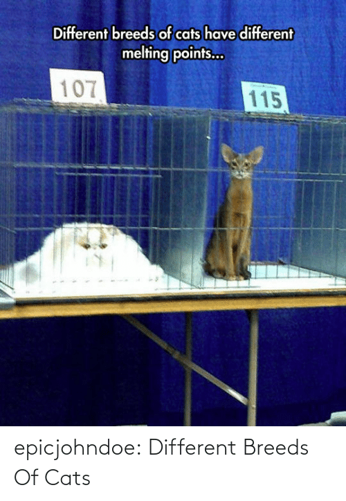 Cats, Tumblr, and Blog: epicjohndoe:  Different Breeds Of Cats