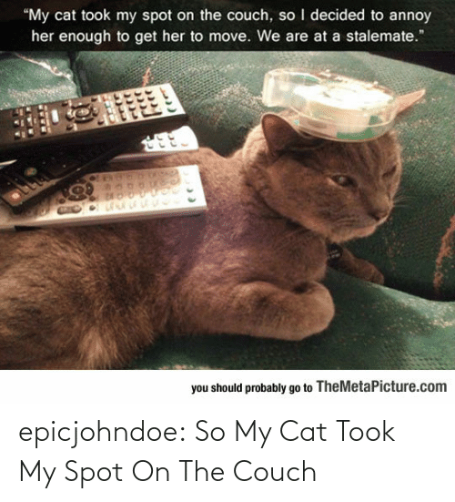 Couch: epicjohndoe:  So My Cat Took My Spot On The Couch