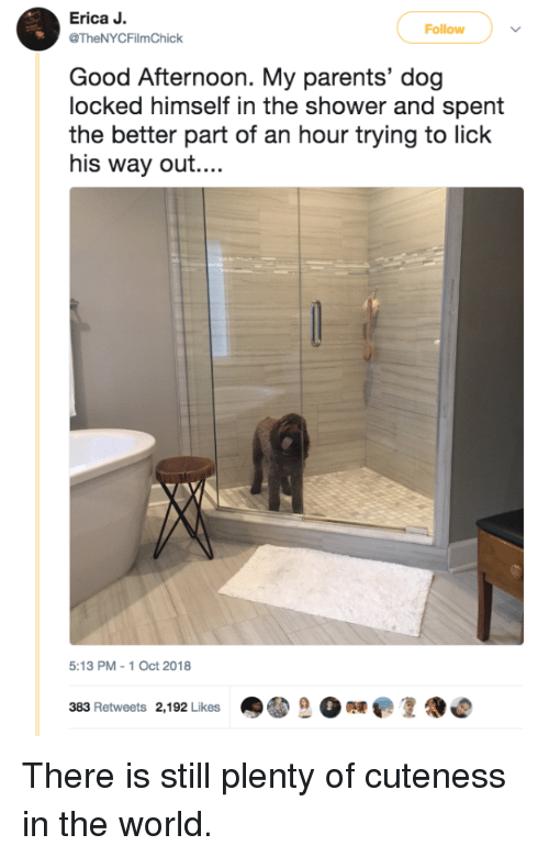 Parents, Shower, and Good: Erica J  TheNYCFilmChick  Follow  Good Afternoon. My parents' dog  locked himself in the shower and spent  the better part of an hour trying to lick  his way out...  5:13 PM-1 Oct 2018  383 Retweets 2,192 Likes There is still plenty of cuteness in the world.