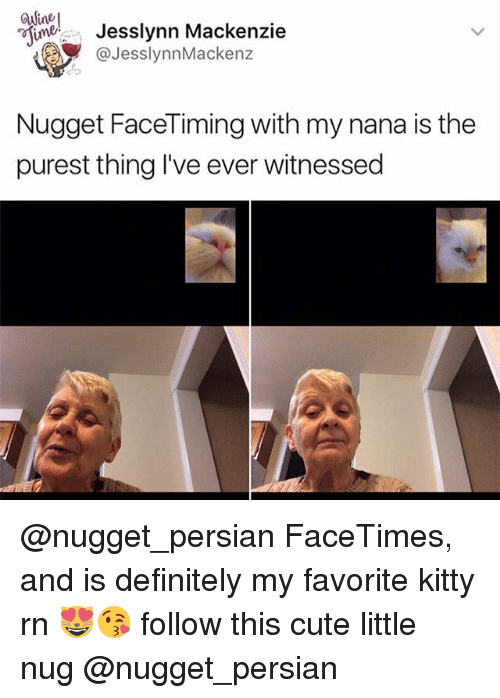 mackenzie: esimer Jesslynn Mackenzie  JesslynnMackenz  Nugget Face Timing with my nana is the  purest thing I've ever witnessed @nugget_persian FaceTimes, and is definitely my favorite kitty rn 😻😘 follow this cute little nug @nugget_persian
