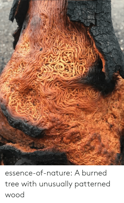 Essence: essence-of-nature:   A burned tree with unusually patterned wood