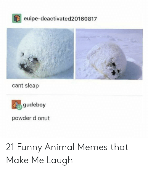 funny animal memes: euipe-deactivated20160817  cant sleap  gudeboy  powder d onut 21 Funny Animal Memes that Make Me Laugh