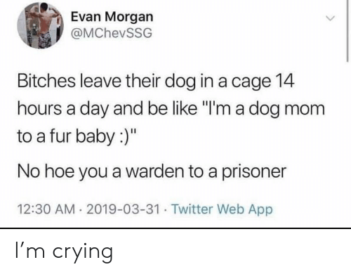 """Be Like, Crying, and Hoe: Evan Morgan  @MChevSSG  Bitches leave their dog in a cage 14  hours a day and be like """"I'm a dog mom  to a fur baby :)""""  No hoe you a warden to a prisoner  12:30 AM 2019-03-31. Twitter Web App I'm crying"""