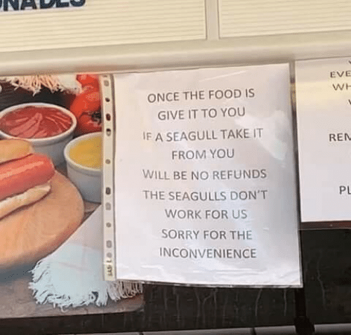 Food, Sorry, and Work: EVE  WH  ONCE THE FOOD IS  GIVE IT TO YOU  IF A SEAGULL TAKE IT  REN  FROM YOU  WILL BE NO REFUNDS  THE SEAGULLS DON'T  PL  WORK FOR US  SORRY FOR THE  INCONVENIENCE